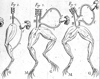 A pen and ink scientific diagram from the 1700s. Four examples of frog's legs being attached to electricity, via a disembodied woman's hand with ruffle. Show's how muscles can be made to twitch with electricity.